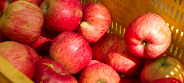 """2014년 10월 25일 (토) 마르쉐@시민의숲 """"열매""""  농부팀을 소개합니다!"""